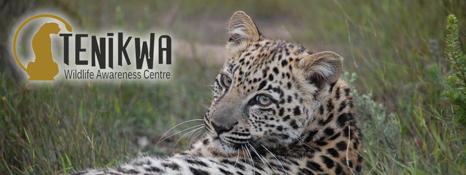 Tenikwa Wildlife Awareness Centre